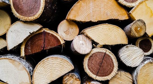 Essenze di legno